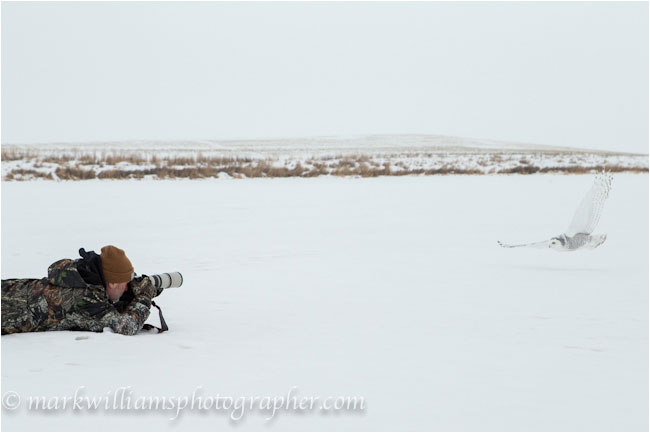 Mark Williams on the ground photographing snowy owl