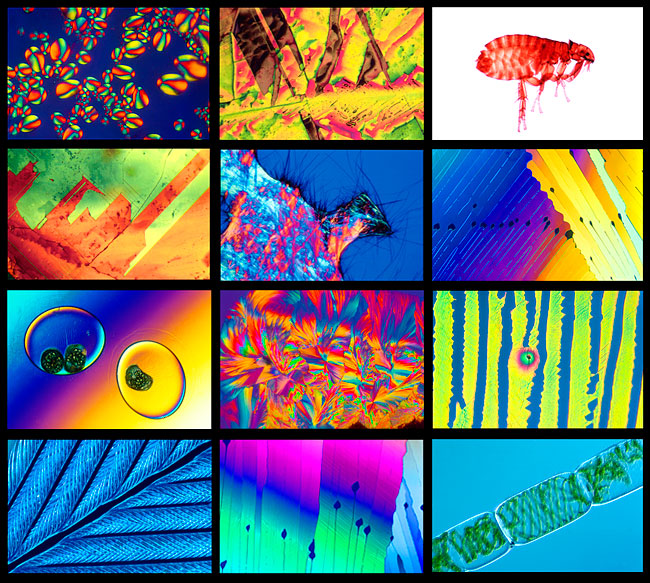 Photomicrographs by Robert Berdan ©