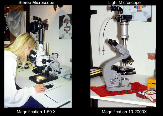 Stereo and light microscope by Robert Berdan ©