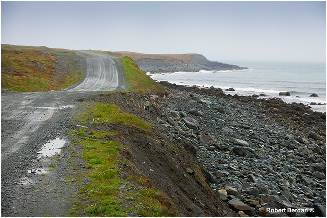 Road to Cape Spear through Mistaken Point Ecological resrve by Robert Berdan ©