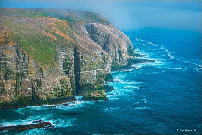Cliffs at Cape St. Mary's by Robert Berdan ©