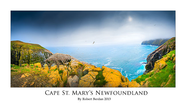 Panorama poster of Cape St. Mary's by Robert Berdan ©