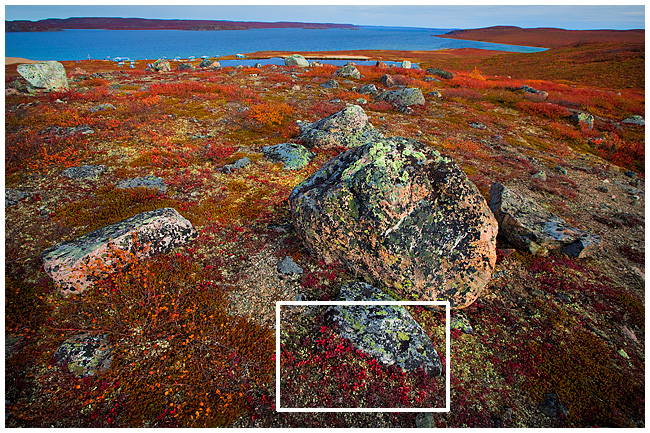 Tundra landscape with box showing closeup region with lichen and bearberry by Robert Berdan ©