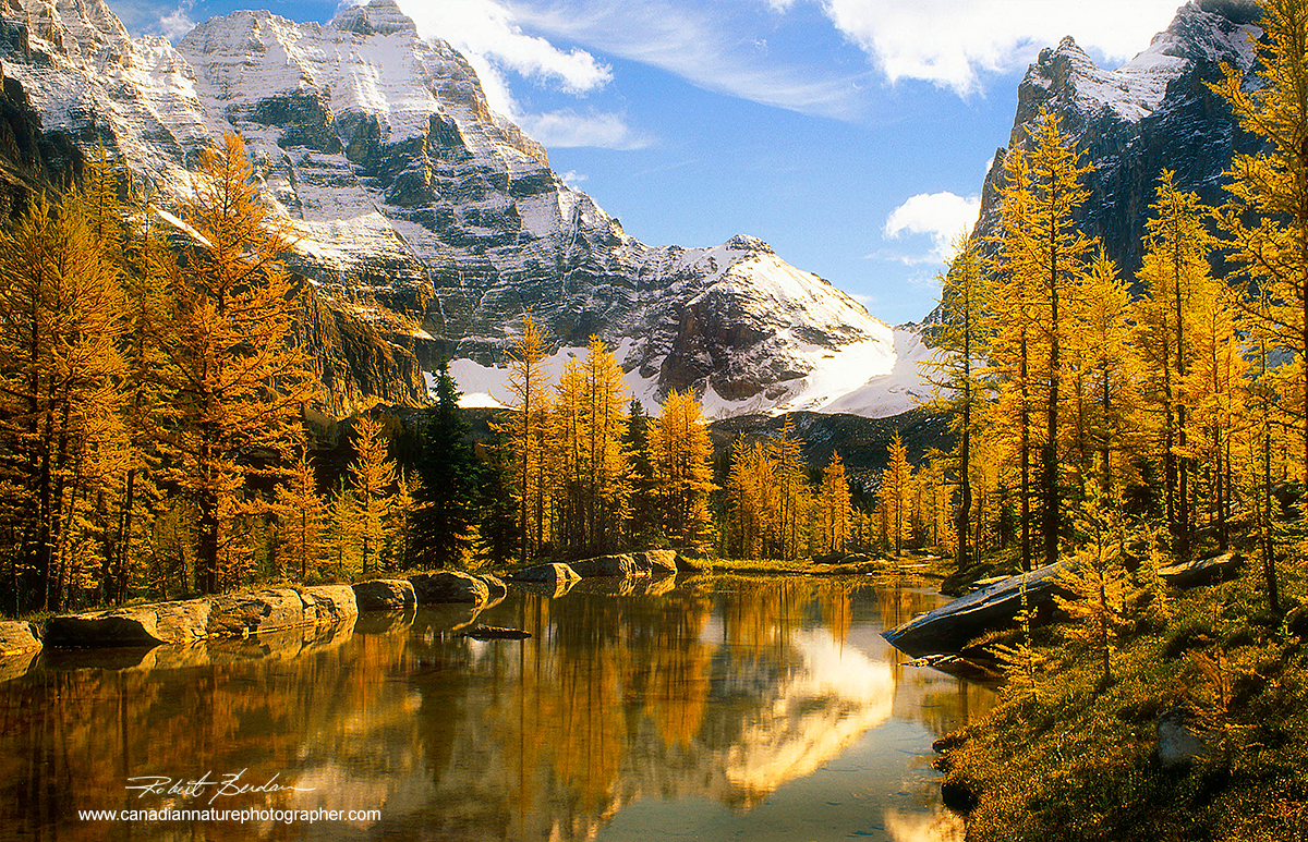 Alpine pond on the Opabin plateau Lake O'hara surrounded by larch trees in autumn by Robert Berdan ©
