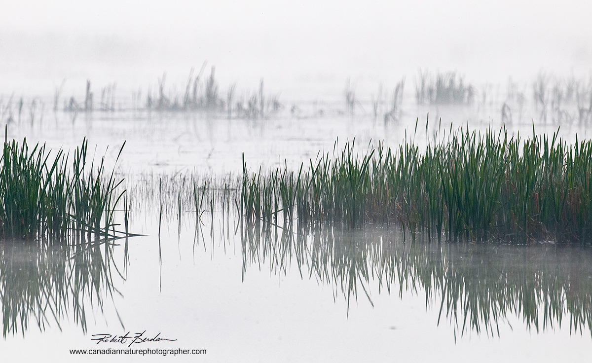 Marsh East of Calgary and North of Chestemere early morning by Robert Berdan ©