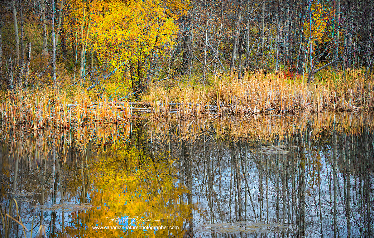 Small pond next to the road in the Bearspaw area of North West Calgary by Robert Berdan ©
