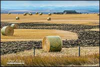 Hay bails and Rocky Mountains north of Calgary by Robert Berdan