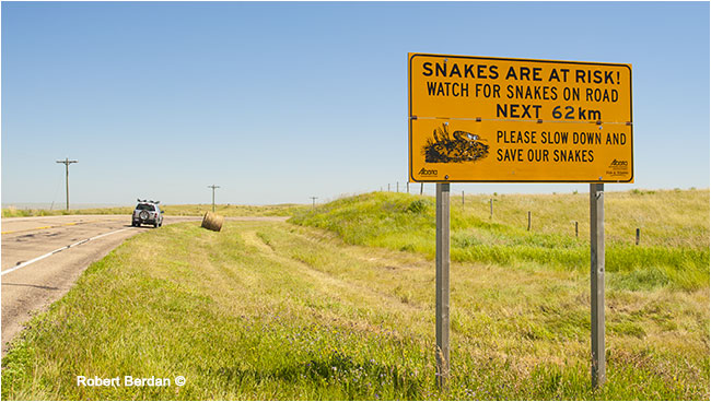 Snakes are at risk sign by Robert Berdan ©