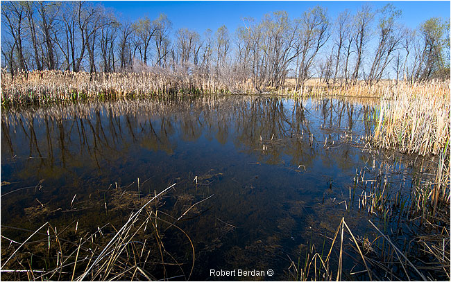 Marsh in Spring time near Lake Newell by Robert Berdan ©