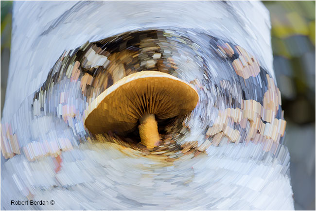 Mushroom growing out of birch tree with star trail filter applied by Robert Berdan ©