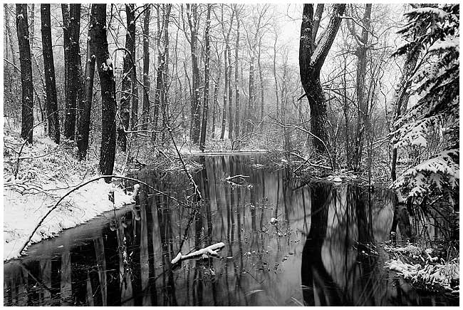 Bowmount Park in winter by Robert Berdan