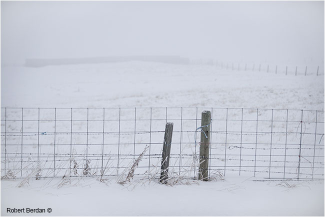 Winter fence by Robert Berdan  ©