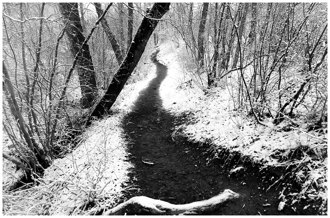 First snow path in Bowmount Park by Robert Berdan ©